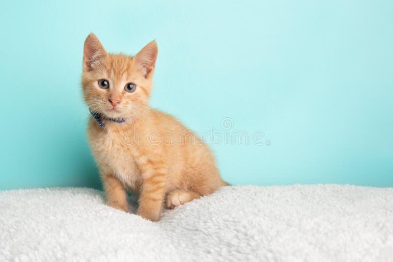Śliczna Młoda Pomarańczowa Tabby kota figlarka Ratownicza Będący ubranym Błękitnego i Białego Poka łęku Kropkowanego krawat Siedz fotografia stock