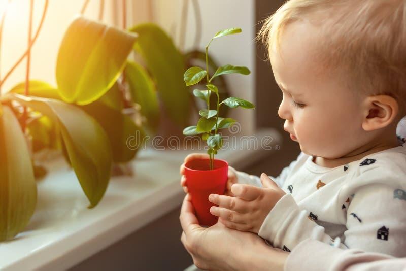 Åšliczna maÅ'a caucasian berbeć chÅ'opiec z macierzysty uÅ›miechać siÄ™ zabawy mienia garnek z uprawianym kwiatem blisko nadoki zdjęcie stock