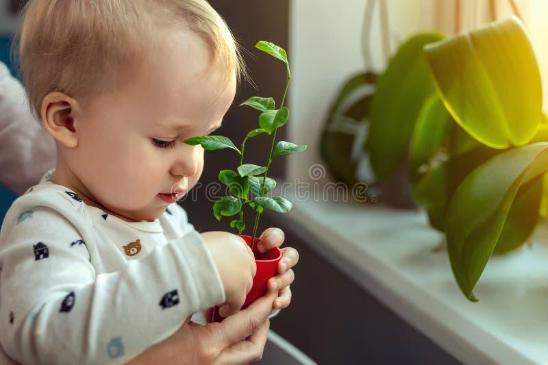 Śliczna mała caucasian berbeć chłopiec z macierzysty uśmiechać się zabawy mienia garnek z uprawianym kwiatem blisko nadoki obraz royalty free