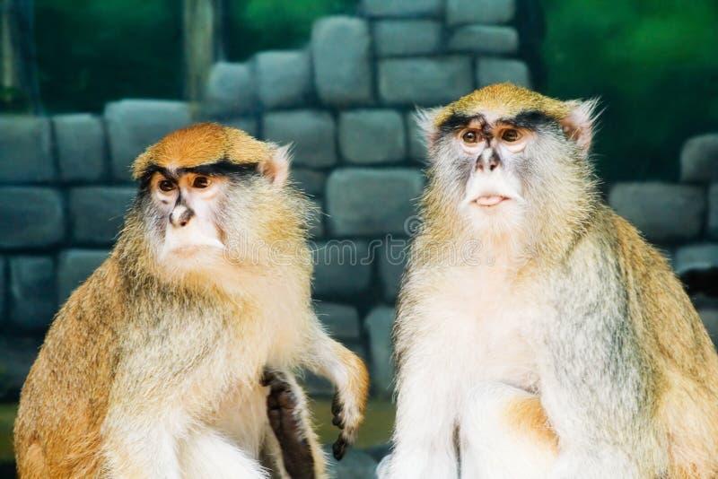 Śliczna Małpa Bezpłatny Obraz Stock