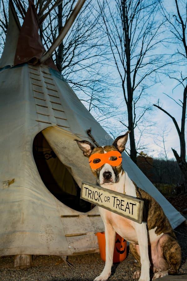 Śliczna pies sztuczka, częstowanie na Halloween lub zdjęcie stock