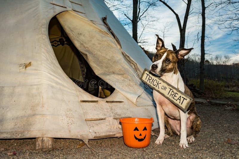 Śliczna pies sztuczka, częstowanie na Halloween lub obraz royalty free