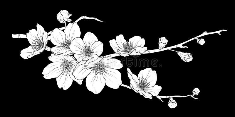 Śliczna ręka rysująca biała sylwetki Sakura gałąź ustawia 2 royalty ilustracja