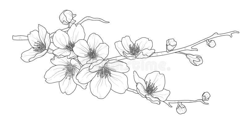 Śliczna ręka rysująca odizolowywająca Sakura gałąź ustawia 2 ilustracja wektor