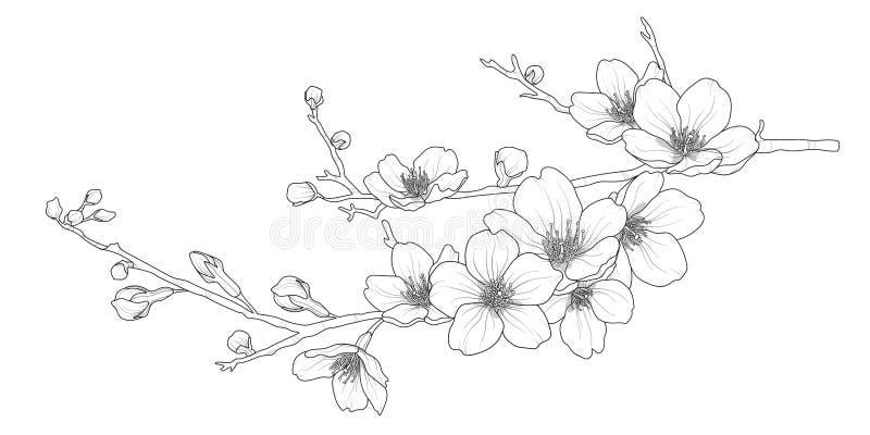 Śliczna ręka rysująca odizolowywająca Sakura gałąź ustawia 1 ilustracja wektor