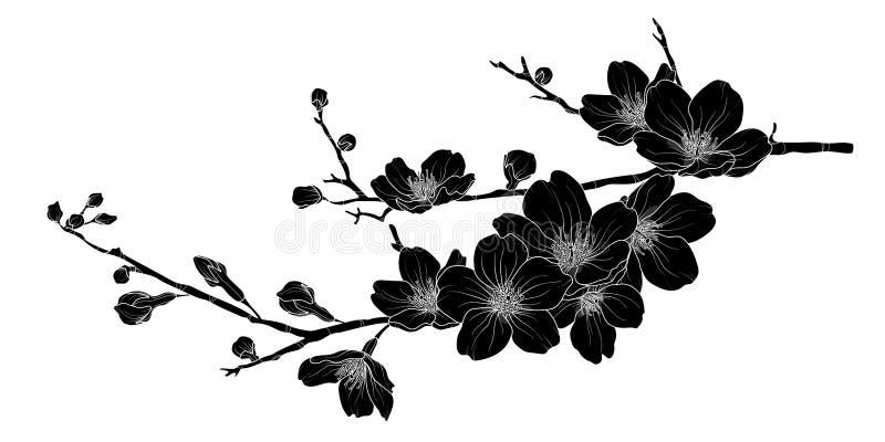 Śliczna ręka rysująca sylwetki Sakura gałąź ustawia 1 ilustracja wektor
