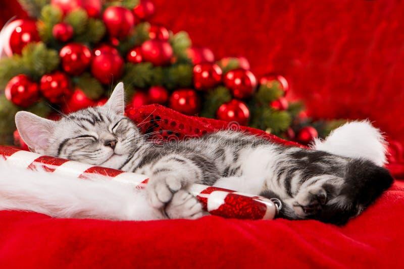 Śliczna sypialna boże narodzenie figlarka na czerwonym tle zdjęcie royalty free