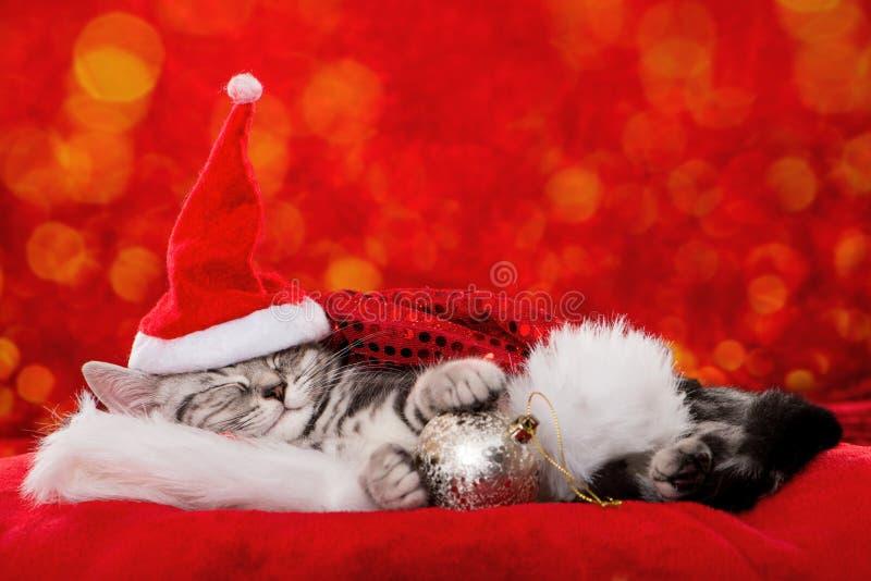 Śliczna sypialna boże narodzenie figlarka na czerwonym tle fotografia royalty free