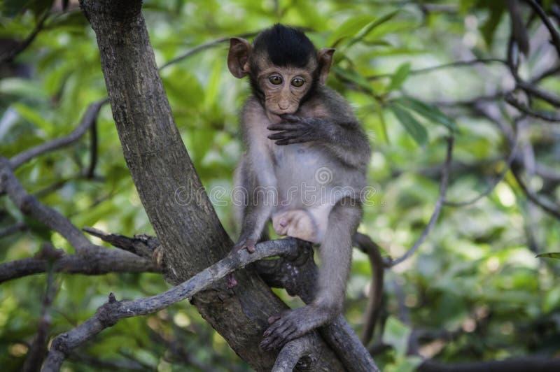 Śliczne małpy żyją w naturalnym lesie Tajlandia obraz royalty free