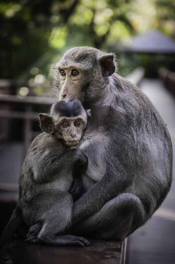 Śliczne małpy żyją w naturalnym lesie Tajlandia fotografia stock
