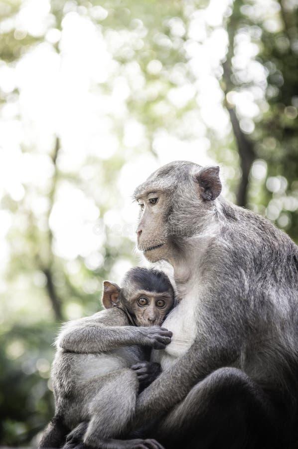 Śliczne małpy żyją w naturalnym lesie Tajlandia zdjęcia royalty free