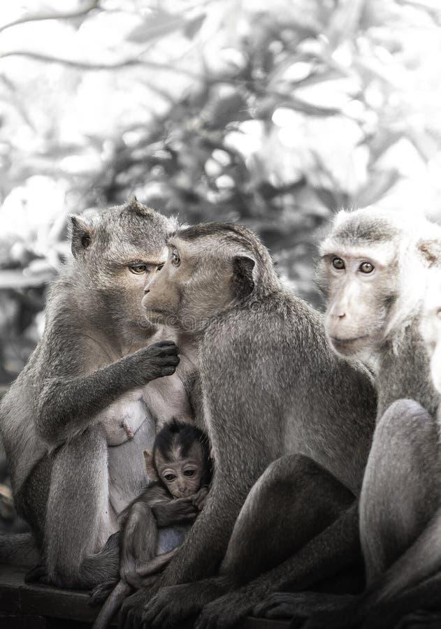 Śliczne małpy żyją w naturalnym lesie Tajlandia obrazy royalty free