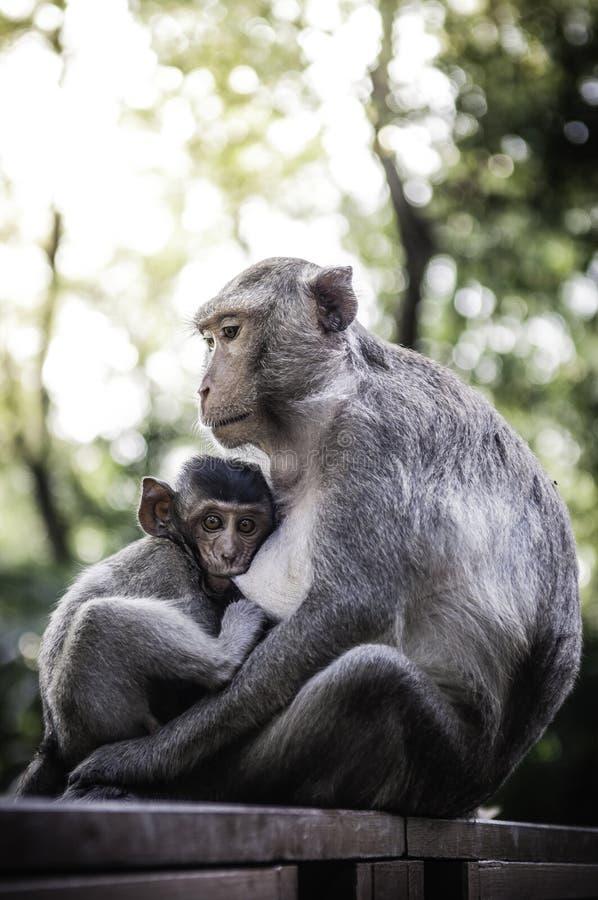 Śliczne małpy żyją w naturalnym lesie Tajlandia obraz stock