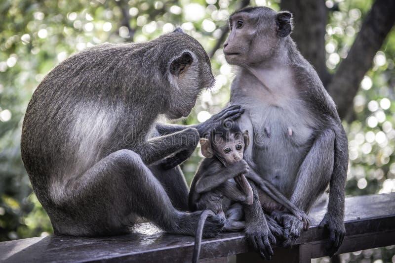 Śliczne małpy żyją w naturalnym lesie Tajlandia fotografia royalty free