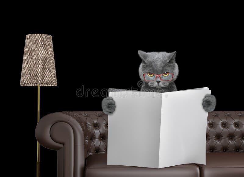 Ślicznego kota czytelnicza gazeta z przestrzenią dla teksta na kanapie w żywym pokoju Odizolowywający na czerni fotografia royalty free