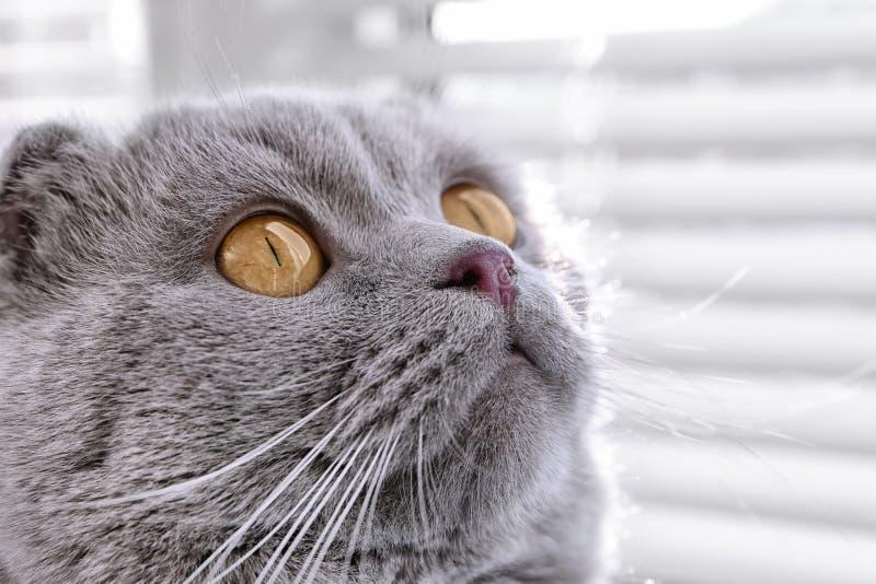 Ślicznego kota odpoczynkowy pobliski okno fotografia royalty free