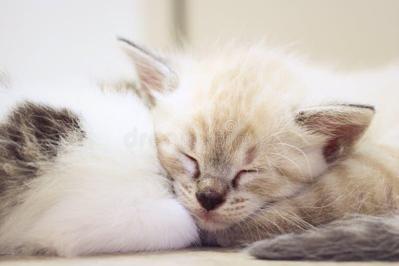 Ślicznej figlarki dziecka mały kot śpi zdjęcie stock