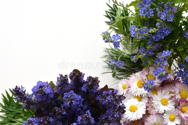 Śliczni bukiety lato kwiaty obrazy stock