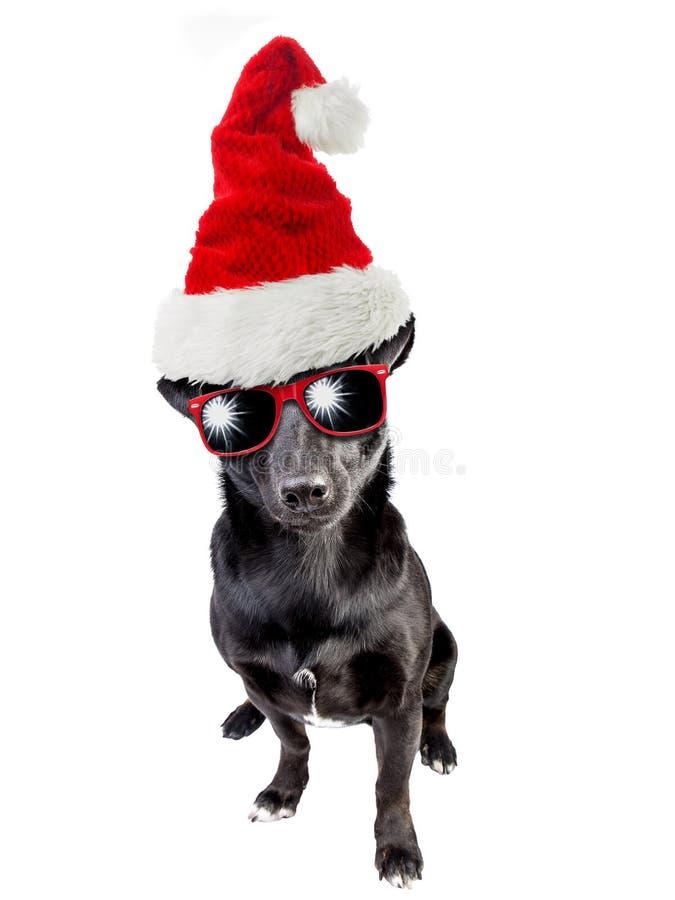 Śliczni czarni psa Santa Claus kapeluszowi boże narodzenia odizolowywający obrazy royalty free
