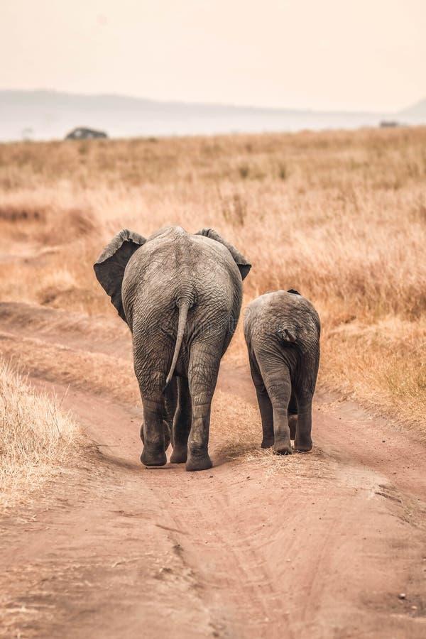 Śliczni dziecko słonie Afryka obrazy royalty free