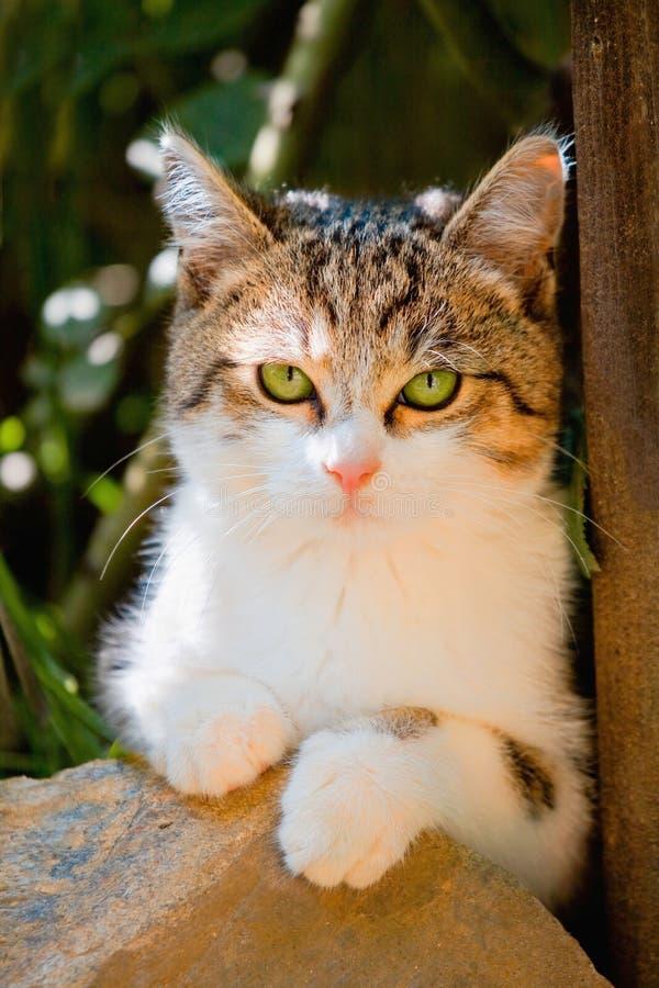 śliczni kotów oczy zielenieją małego portret zdjęcia stock