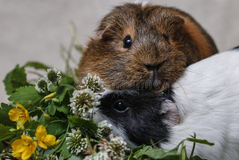Śliczni króliki doświadczalni z śródpolnymi kwiatami zdjęcia stock