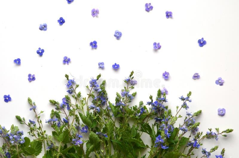 Śliczni lato kwiaty obraz stock