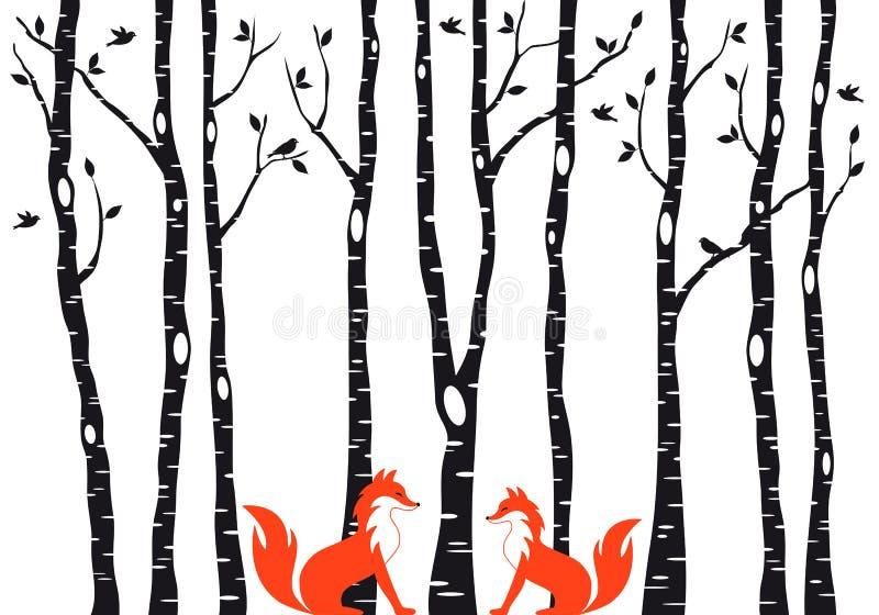 Śliczni lisy z brzoz drzewami, wektor royalty ilustracja