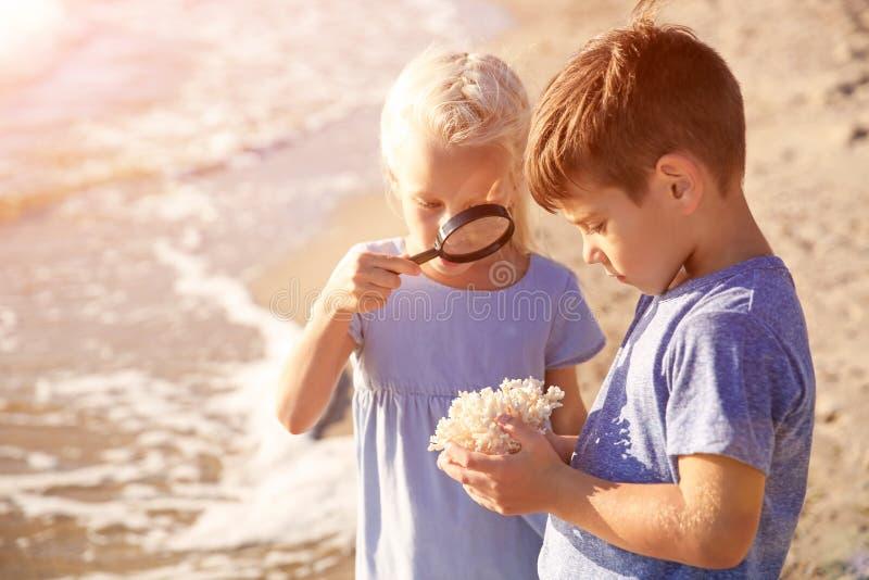 Śliczni małe dzieci patrzeje koral przez powiększać - szkło na morze plaży zdjęcia royalty free