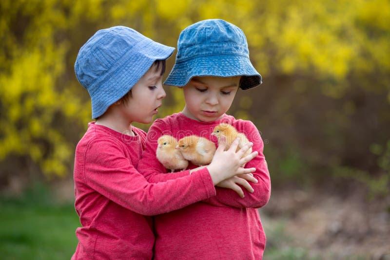 Śliczni słodcy małe dzieci, preschool chłopiec, bawić się z trochę zdjęcie royalty free