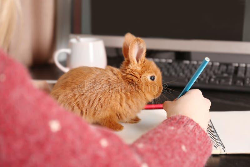 Śliczny śmieszny królika obsiadanie na notatniku i kobiecie zdjęcia royalty free
