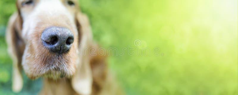 Śliczny śmieszny pies obrazy royalty free