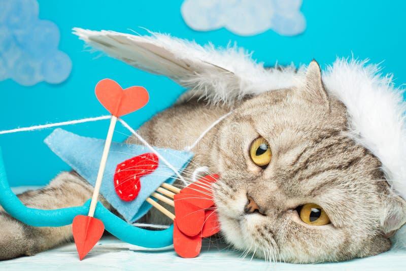 Śliczny anioła kot, amorek z łękiem i strzała, zdjęcie stock