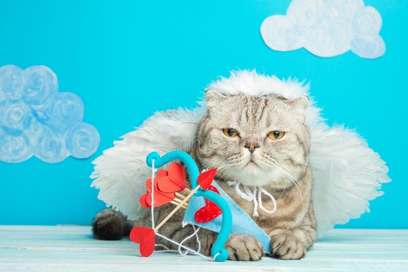 Śliczny anioła kot, amorek z łękiem i strzała, fotografia stock
