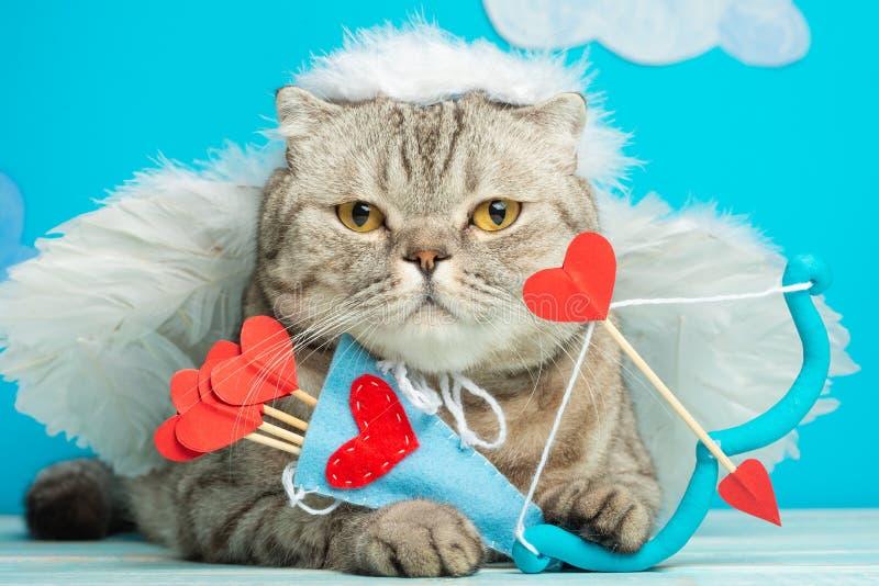 Śliczny anioła kot, amorek z łękiem i strzała, fotografia royalty free