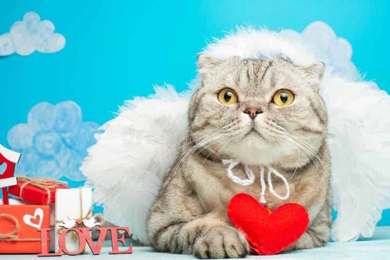 Śliczny anioła kot z czerwonym sercem w swój łapach z prezentami dla walentynka dnia, amorek fotografia stock