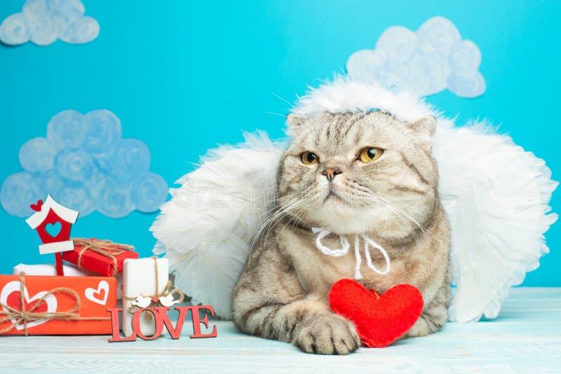 Śliczny anioła kot z czerwonym sercem w swój łapach z prezentami dla walentynka dnia, amorek zdjęcie royalty free