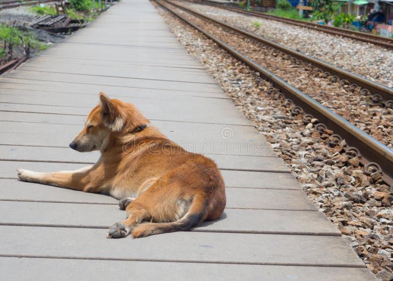 Śliczny brązu psa obsiadanie samotnie i dosypianie na boardwalk blisko kolejowego śladu zdjęcia royalty free