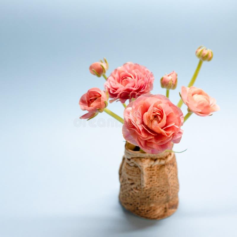 Śliczny bukiet delikatni różani ranunculuses na błękitnym tle zdjęcie stock