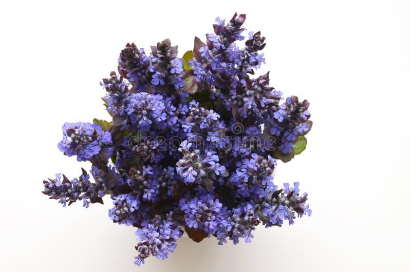 Śliczny bukiet lato wiosny kwiaty zdjęcie royalty free