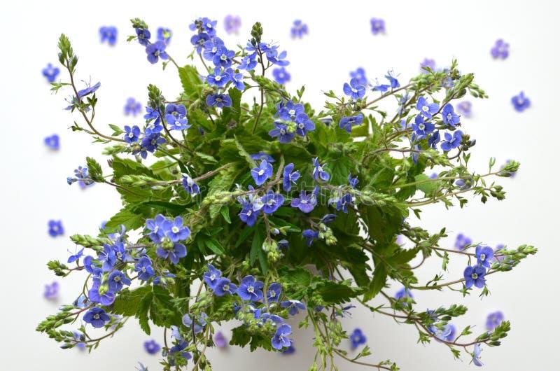 Śliczny bukiet wiosna kwiaty obrazy royalty free
