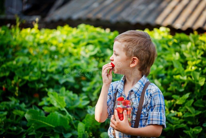 Śliczny chłopiec jeść dojrzałe świeże truskawki w lecie Garde obraz stock