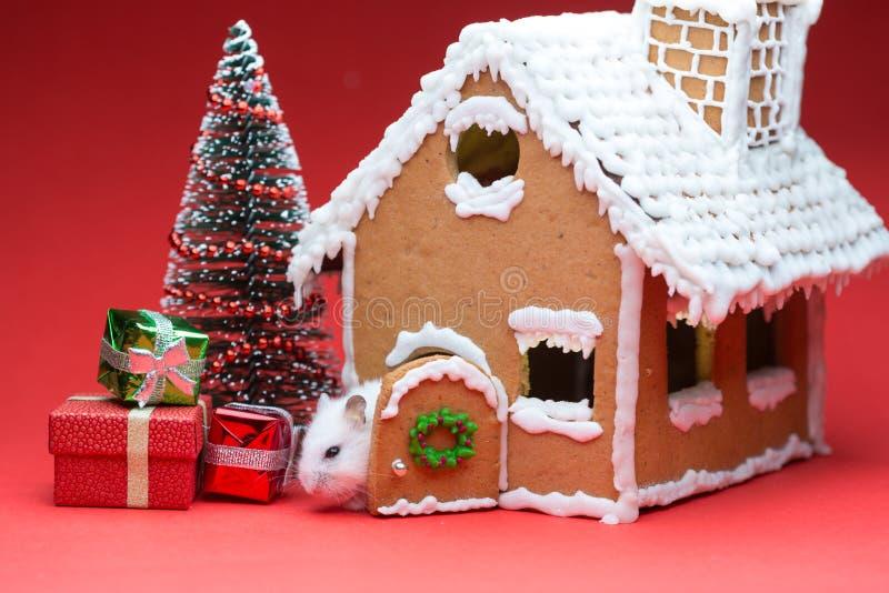 Śliczny chomik blisko jego ciastko domu zakłada prezent choinki obrazy stock