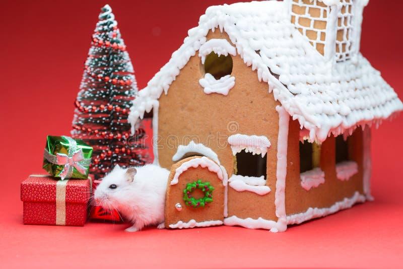Śliczny chomik blisko jego ciastko domu zakłada prezent choinki obraz royalty free