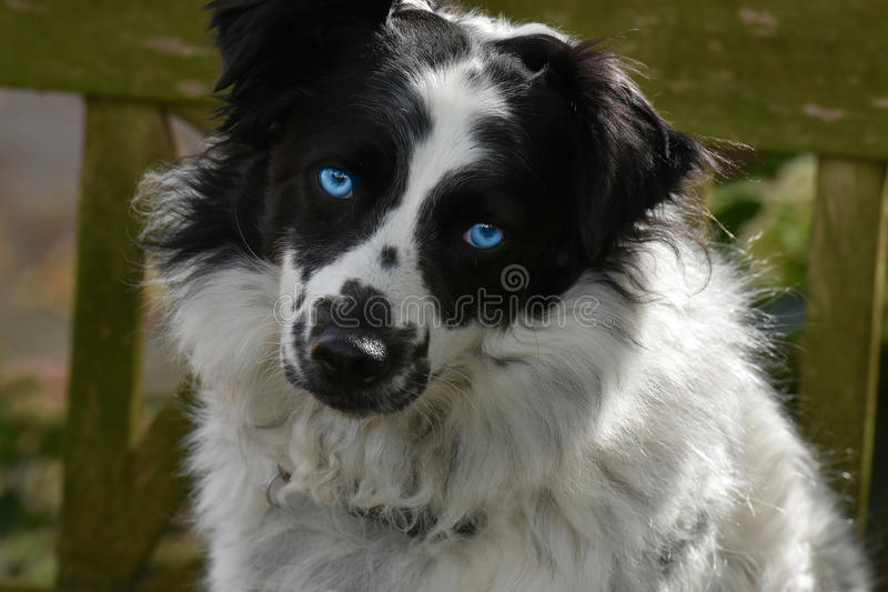 Śliczny crossbreed pies fotografia royalty free
