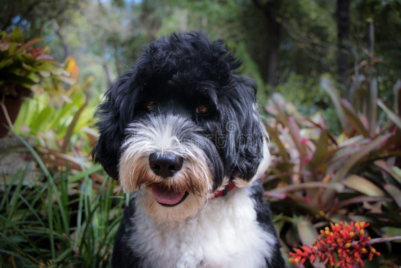 Śliczny czarny i biały pies w ogródzie zdjęcie stock