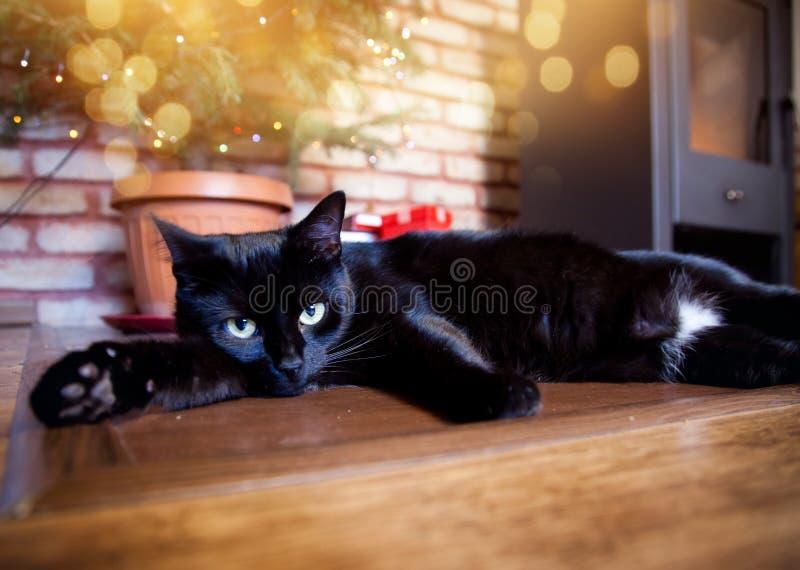 śliczny czarny kot relaksuje przed choinką i ogień palimy obraz stock