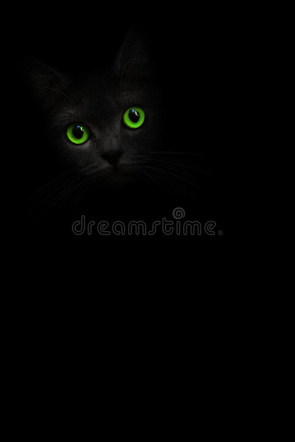 Śliczny czarny kot z zielonymi oczami jest przyglądający z cienia na tle Kota pussycat kota oczu zieleń Sztuka cienia kiciunia Ko obraz stock