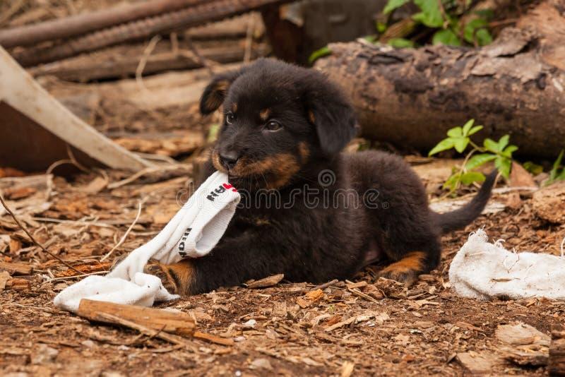 Śliczny czarny przybłąkanego psa szczeniak zdjęcie stock