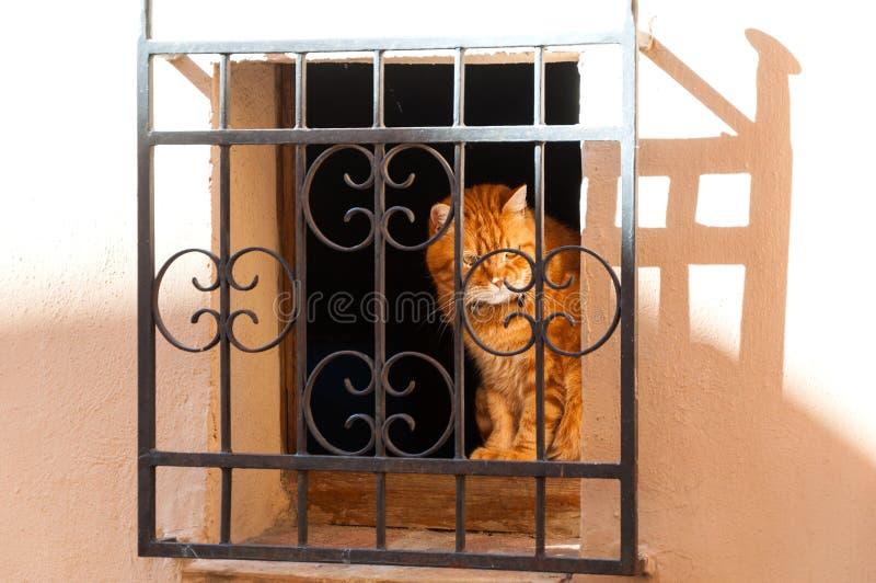 Śliczny czerwony kota obsiadanie na okno obrazy stock